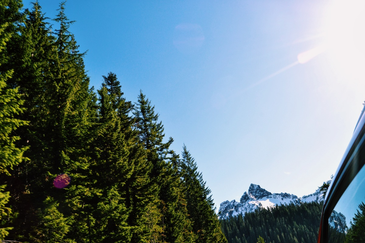 Mount Rainier NationalPark!