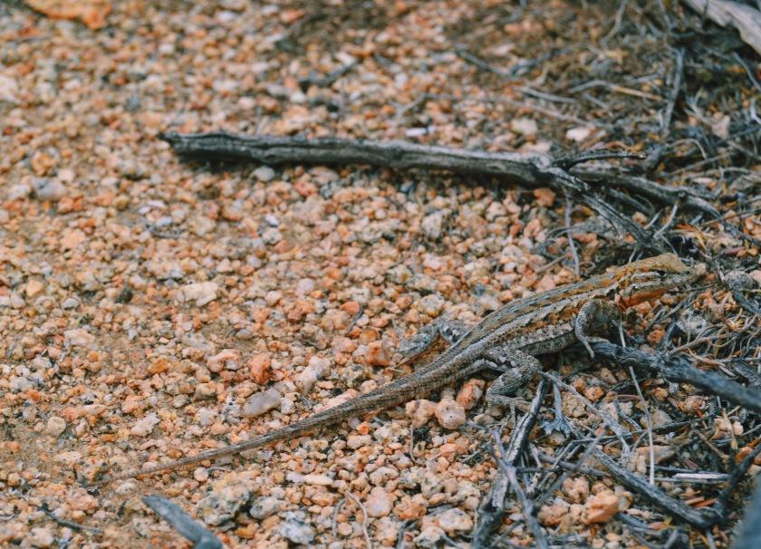 newt guy