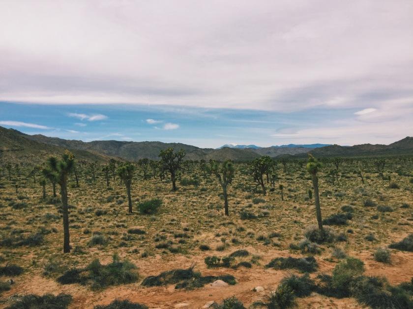 better landscape