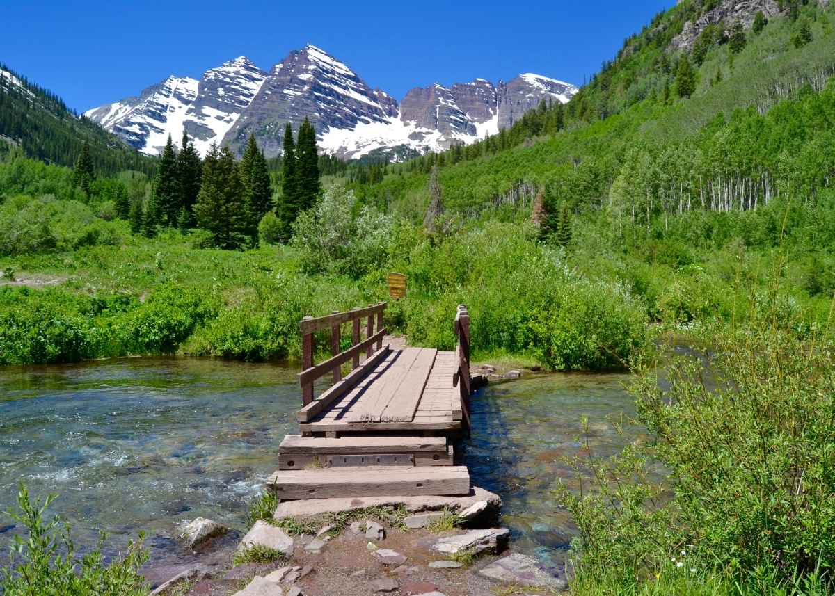 Now presenting… MAROON BELLS